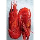 Wild Caught Carabinero Shrimp  2pcs / Pad