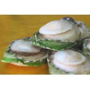 Australia Abalone